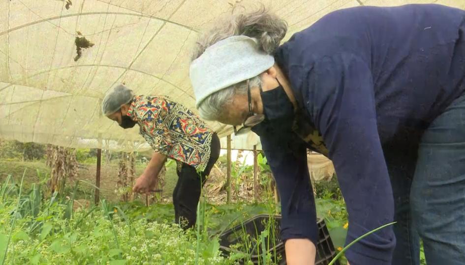 Certificação orgânica e consumo de plástico são assuntos do 'Jacareí Rural' na TV Câmara Jacareí